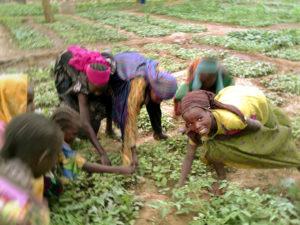 africa-donne-per-un-cambiamento-coltivazione-ciad-orti-comunitari-2a