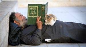 olo-isis-e-i-gatti-gatto-islam